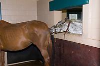 Winstar Farm (thoroughbred horse farm), Versailles (near Lexington), Kentucky USA