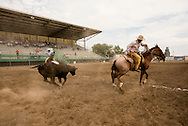 Will James Roundup, Ranch Rodeo, Three Man Cow Doctoring, Hardin, Montana, Tom Curtin, MODEL RELEASED, PROPERTY RELEASED on front rider only.
