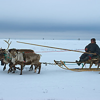 A reindeer caravan herded by the last nomadic Komi clan crosses vast frozen tundra north of the Arctic Circle, near Nizhnyaya Pesha, Russia. Driving this sled is Stass Pan'kov.