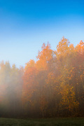 Fog and sunrise light partly hides and displays autumn colors in forest edge, Nature preserve Krustkalni (Krustkalnu dabas rezervāts), Latvia Ⓒ Davis Ulands | davisulands.com