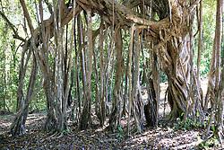 Surrounding Reed's Finca