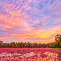 New England fall foliage colors and cranberry bog harvest at the Spring Rain Farm in Taunton, Massachusetts <br /> <br /> New Englan cranberry bog harvest and fall foliage photography images are available as museum quality photo, canvas, acrylic, wood or metal prints. Wall art prints may be framed and matted to the individual liking and interior design decoration needs:<br /> <br /> https://juergen-roth.pixels.com/featured/massachusetts-cranberry-bog-harvest-juergen-roth.html<br /> <br /> Good light and happy photo making!<br /> <br /> My best,<br /> <br /> Juergen