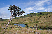 View of Horton's Plains National Park showing upland grassland, montane forest and tree rhodedendron vegetation and the Kelani River, Horton's Plains, Sri Lanka