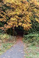 A trail in Salt Spring Island's Duck Creek Park leads into the rainforest under a Bigleaf Maple tree.  Duck Creek Park is near Vesuvius on Salt Spring Island, British Columbia, Canada.