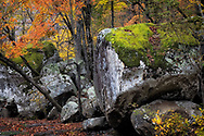 Moss covered boulder with fall leaves