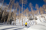 Backcountry skier Judd MacRae stands in an open aspen grove in Uncompahgre National Forest, Colorado.