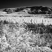 Vineyard and hills near Sonoma, CA.