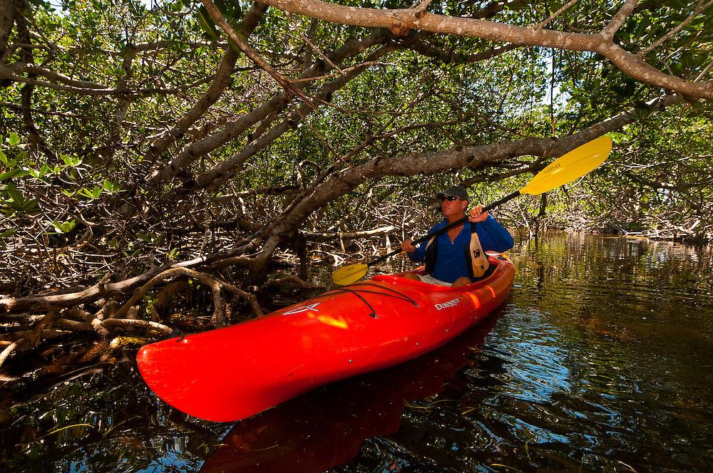 Kayaking in a mangrove tidal creek (Big Pine Kayak Adventures), Big Pine Key, Florida Keys, Florida USA