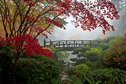 Autumn maples and morning ground fog create a whisper quiet atmosphere around Moon Bridge, at Portland, Oregon's Japanese Garden.