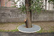 tree in city environment