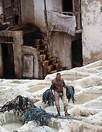 Man carrying dyed skins in centuries-old tannery, Fez, Morocco