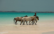 Horses in the sea at Pink Sands Beach, Harbour Island, The Bahamas