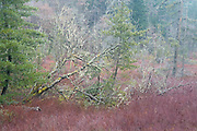 Winter wetland colors, Whidbey Island, Washington State