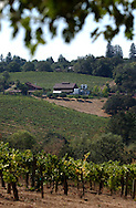 The Iron Horse Vineyards is located in the rolling hills of Sanoma County in Sebastopol, Calif. on Saturday Sept. 27, 2003. (Photo by Jakub Mosur)