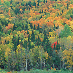 Allagash Village, St. John River,  ME.   A northern hardwood forest in fall.