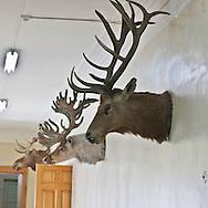 Mongolia. Natural history museum, Ulaanbataar