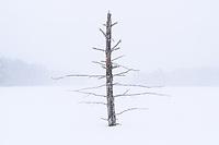https://Duncan.co/lone-dead-tree-in-frozen-lake
