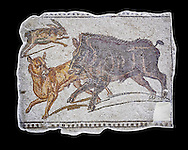 First half of the 3rd century AD Roman mosaic depiction  a wild boar and hare hunt. From Hadrumetum (Sousse), Tunisia.  The Bardo Museum, Tunis, Tunisia. black background .<br /> <br /> If you prefer to buy from our ALAMY PHOTO LIBRARY  Collection visit : https://www.alamy.com/portfolio/paul-williams-funkystock/roman-mosaic.html - Type -   Bardo    - into the LOWER SEARCH WITHIN GALLERY box. Refine search by adding background colour, place, museum etc<br /> <br /> Visit our ROMAN MOSAIC PHOTO COLLECTIONS for more photos to download  as wall art prints https://funkystock.photoshelter.com/gallery-collection/Roman-Mosaics-Art-Pictures-Images/C0000LcfNel7FpLI