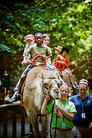 Children ride a camel at the Philadelphia Zoo on June 25, 2008.