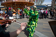 May Day custom of Deptford Jack in the Green, a man encased in a framework entirely covered with greenery, is one of the lesser-known modern revivals by the Blackheath Morris Men of English traditional customs on May 1st 2016 in London, United Kingdom. Traditional Morris Dancing in Greenwich. Fowlers Troop Jack in the Green was revived in the early 1980s. Originally a revival from about 1906, it developed from the 17th Century custom of milkmaids going out on May Day with the utensils of their trade, decorated with garlands of flowers and piled into a pyramid which they carried on their heads. By the mid eighteenth century other groups, notably chimney sweeps, were moving in on the milkmaids territory as they saw May Day as a good opportunity to collect money, so carried a Jack in the Green. Over the last 25 years several popular festivals have grown up around the Jack in the Green tradition. Deptford Jack in the Green is not very widely known although it has been running since the early 1980s.