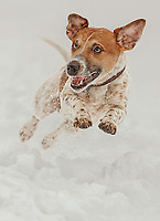 Dog, Winter