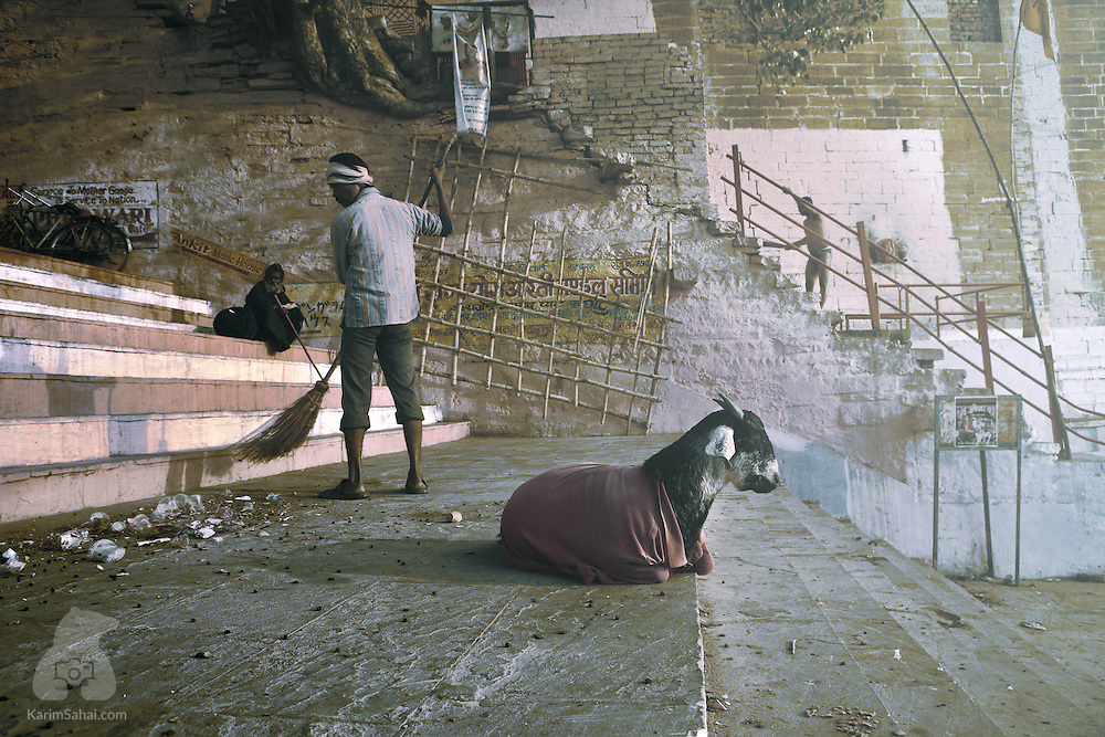 Varanasi, Uttar Pradesh, India; a man sweeps the steps of Dasashvamedh Ghat - one of the main staircases leading to the sacred Ganges river - while an impassible goat sits nearby.