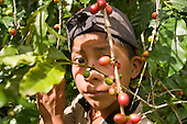 The Grinds of Life: Mexico's Struggling Coffee Industry