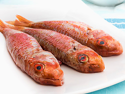 Fresh red mullet fish on tray, Getxo, Algorta, Basque Country, Biscay, Spain, Europe