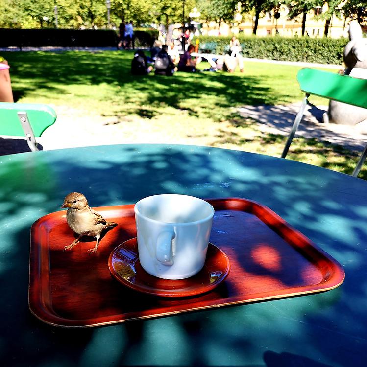 Kaffekompis på Tetley, tehuset under almarna.