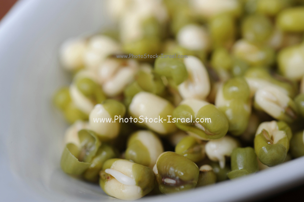 Organic Health Food - Mung bean sprouts (Vigna radiata)