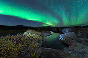 Northern lights (aurora) in Thingvellir.