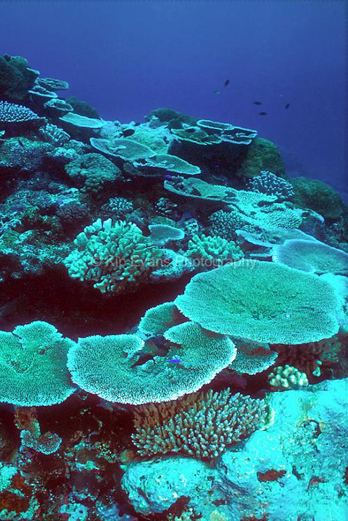 Coral Reef, American Somoa