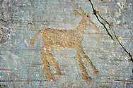 Prehistoric petroglyph rock carvings of a deer carved by the Camunni people in the iron age between 1000-1600 BC, from Rock 32 of  National Park of Naquane, Lombardy, Italy .<br /> <br /> Visit our PREHISTORY PHOTO COLLECTIONS for more   photos  to download or buy as prints https://funkystock.photoshelter.com/gallery-collection/Prehistoric-Neolithic-Sites-Art-Artefacts-Pictures-Photos/C0000tfxw63zrUT4<br /> If you prefer to buy from our ALAMY PHOTO LIBRARY  Collection visit : https://www.alamy.com/portfolio/paul-williams-funkystock/valcamonica-rock-art.html