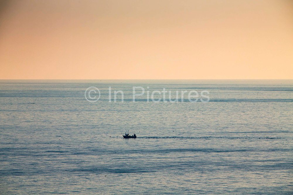 A British fishing boat surrounded by seagulls arriving back into Folkestone Harbour at sunset after inshore trawling in the English Channel.