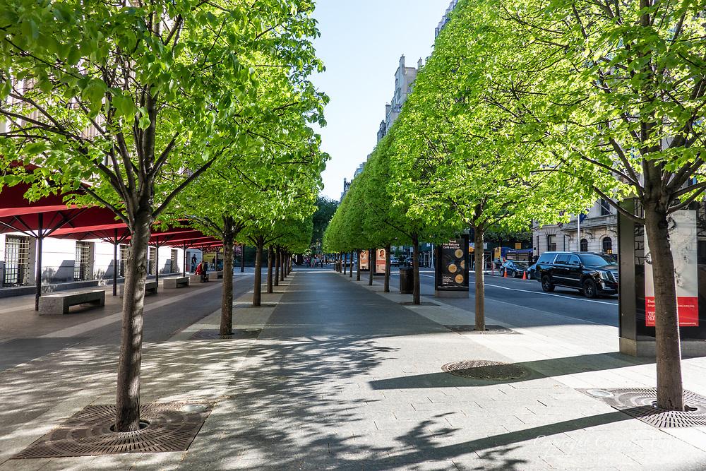 Linden trees in front of the Metropolitan Museum of Art