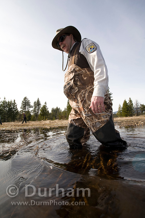 Biologist Howard Browers from the U.S. Fish and Wildlife Service looks for spotted frog (Rana pretiosa) egg masses in Conboy Lake National Wildlife Refuge during a survey.
