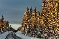 Snowy winter scene near Trysil, Norway.