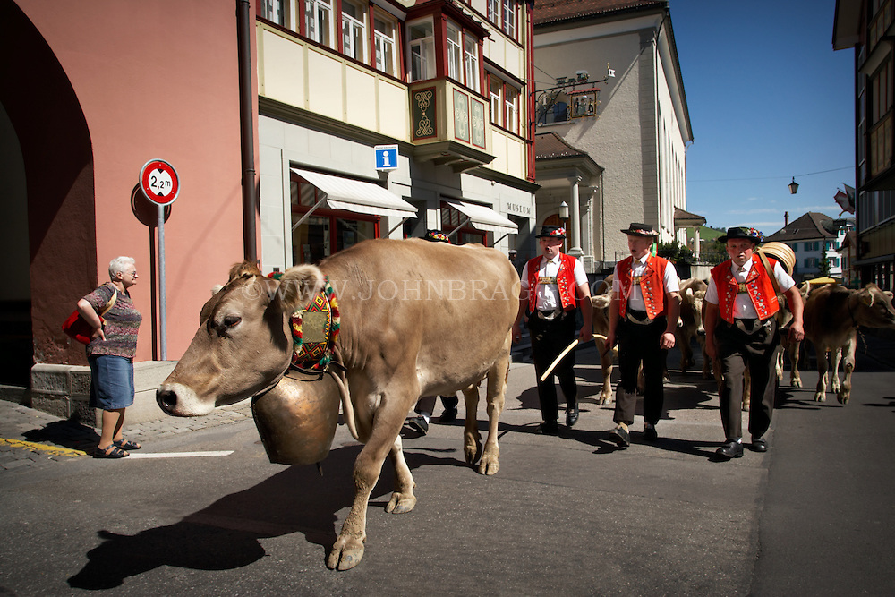 A brown cow decorated with a large bell leads the cow parade with swiss men in traditional clothing down the streets of Appenzell, Switzerland