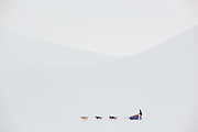 A woman rides a sled pulled by a commercial dog team down Bolterdalen, Svalbard.