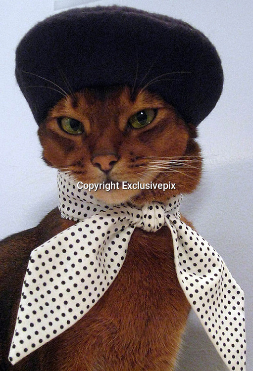 Ready for the Catwalk...the amazing 'haute CAT-ture' for the fashion-conscious feline<br /> <br /> Forget a collar and bell, this stylish feline is turning heads with it's range of glamorous accessories good enough for any catwalk.The amazing 'haute CAT-ture' is the work of New Yorker Julie Song, who painstakingly designs and crafts the garments herself.Working under the alias 'CatAtlelier', Korean-American Julie, 33, has created a wacky range of hats and collars for the fashion-conscious feline.<br /> <br /> The wacky creations include gold headbands, berets, a range of bow-ties and even a top-hat so that prissy pusses have a look for every occasion.The moggy milliner targets her work at the 'fashion-forward feline' and their style-conscious owners.Almost as much work goes into taking the adorable photos of her model and muse, Julie's own cat, three-year-old Abbysinian 'Toki Nantucket'.<br /> Julie, a full-time designer who creates the cat clothes in her spare time, said: 'I think it's really important to prepare everything first - the camera, the area you will be using to take pictures, the lights, props, and the exact accessories or clothes you will use, so your cat is not sitting there wearing all this stuff while you're still fiddling around.<br /> 'I keep photo shoots short so Toki knows it won't be some kind of torture session when I dress him. That way he won't dread wearing clothes.'<br /> And while some supermodels won't get out of bed for less than five thousand dollars, Toki's services can be bought for the more modest price of a few chunks of juicy chicken.<br /> Julie said: 'For Toki, it's really all about the chicken. Toki loves chicken.<br /> <br /> 'I bake chicken and cut it up into bites that I keep in Ziploc bags in the refrigerator and freezer for his treats.'I give him some before each photo shoot, and also immediately after.'The pieces are priced between £6 up to £56 and can take days to make.Talented Julie, an illustration graduate of the pres