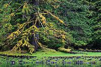 Lush rainforest patterns in Anna Inlet, Queen Charlotte Islands, BC, Canada