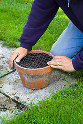 Covering a pot with wire mesh to avoid squirrels digging up bulbs