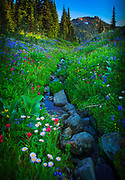 Abundance of wildflowers along creek in Mount Rainier National Park in Washington state, USA