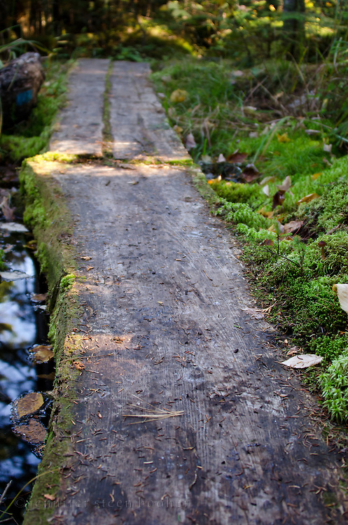 Moss growing around a rustic log boardwalk, Baxter State Park, Maine