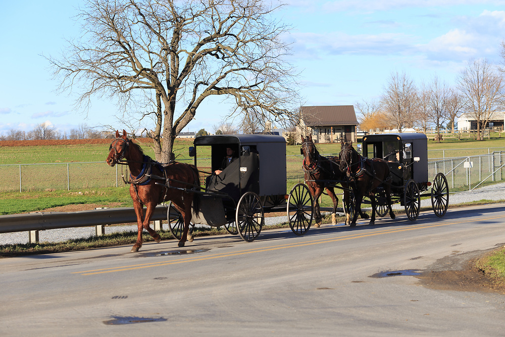 Gordonville, PA / USA - January 10, 2016: Two Amish buggies in Lancaster County, one with two horses.