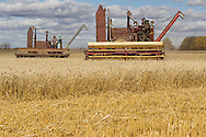 Photo Randy Vanderveen<br /> LaGlace, Alberta<br /> 2015-09-26 <br /> Gary Dixon (front) and Bryan Woronuk work in tandem with old Massey Harris combines as they harvest  Canada Prairie Spring (CPS) wheat takes place on Gary and wife Shirley's land for the Bear Lake  Growing Project. The grain will be sold and money donated to the Canadian Food Grains Bank. This year the project had a number of groups and individuals from around the South Peace sponsor an acre to cover the input costs so all the money from the grain sold could be donated.