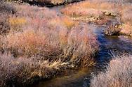 Spring willows, Cherokee Park rd CO
