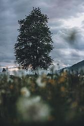 THEMENBILD - ein Baum in einer Blumenwiese bei Schlechtwetter, aufgenommen am 20. Mai 2020 in Kaprun, Österreich // a tree in a flower meadow in bad weather, Kaprun, Austria on 2020/05/20. EXPA Pictures © 2020, PhotoCredit: EXPA/ JFK