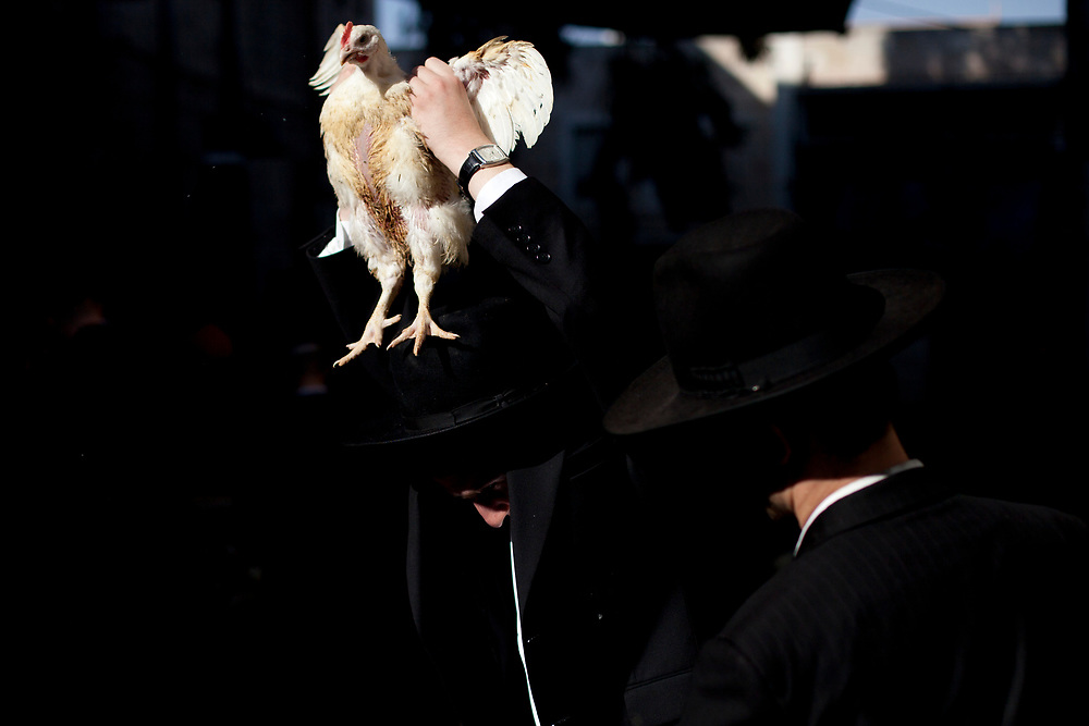 An ultra-Orthodox Jewish man swings a chicken, later to be slaughtered, over the head of another Jewish man as part of the Kaparot ritual, ahead of the Jewish holiday of Yom Kippur in the neighborhood of Mea Shearim on September 15, 2010. Kaparot is a ritual connected to Yom Kippur, where chickens are slaughtered as a symbolic gesture of atonement, it is believed that one transfers one's sins from the past year into the chicken.