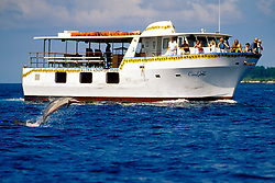 Long-snouted Spinner Dolphin, Stenella longirostris, leaping in front of Coral See, glass bottom, dolphin & whale watching boat, Kona, Big Island, Hawaii, Pacific Ocean